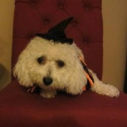 Pet Halloween Costumes with Dog Wigs