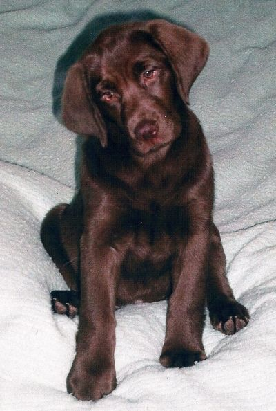 "Haley's Puppy Pic-""she ought to be in movies"""
