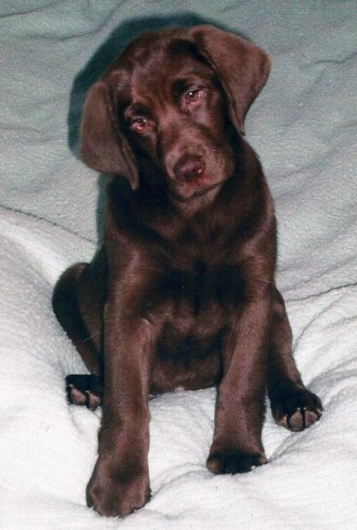 """Haley's Puppy Pic-""""she ought to be in movies"""""""