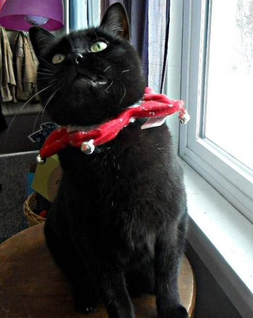 Cat Jester