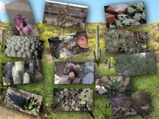 Succulents and Dessert Plants Collage