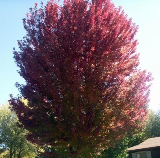 Flagstaff Arizona Fall Colors