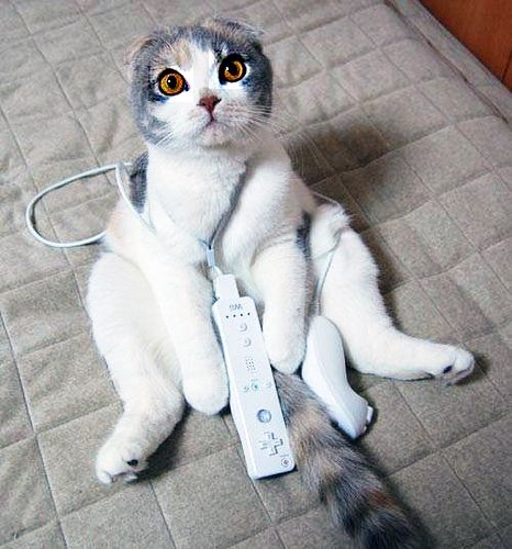 wii cat