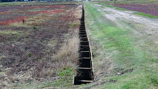 Field Troughs used for Irrigation