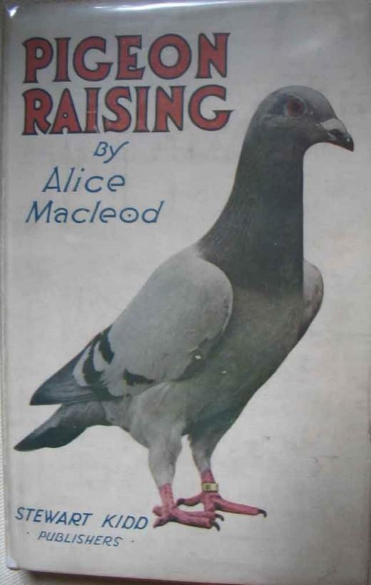 Pigeon Raising by Alice Macleod