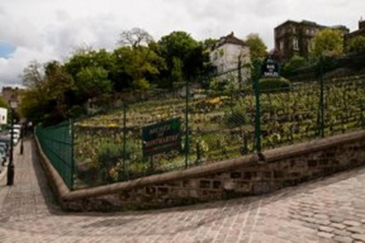 urban vineyard