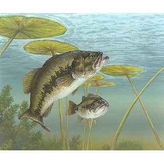 Graphic is available from Zazzle on a mousepad: bass-largemouth by canoeriver