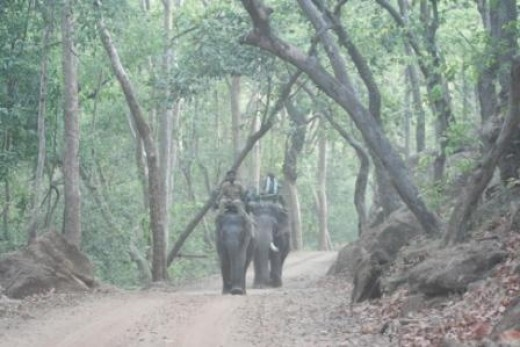 Safari Elephants  at Kanha