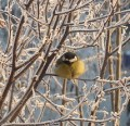 Feeding Birds In Winter: Bird Feeders, Shelter and Drinking Water
