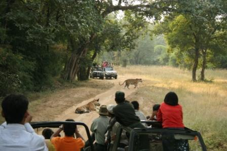 Tiger sightings on jeep safaris