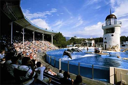 Dolphins performing in Sea World, San Antonio