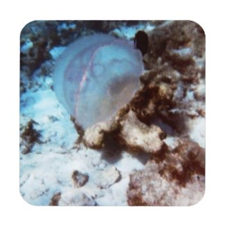Jellyfish  at CocoCay