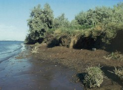 Where Kennewick Man was discovered