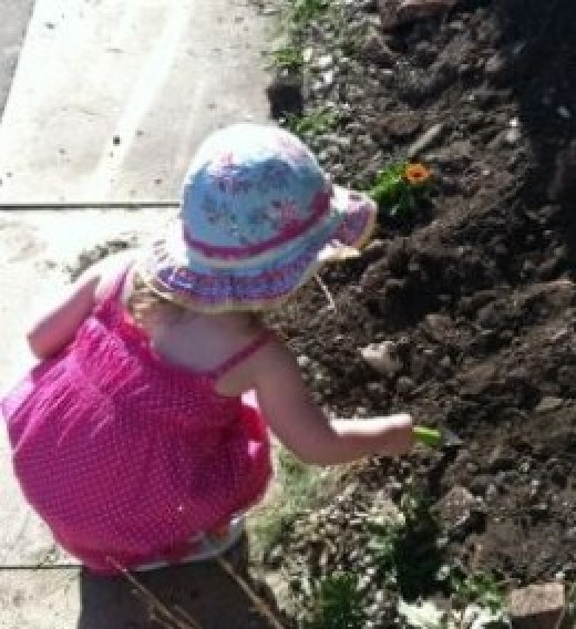 Toddler Gardening - Copyright of the author