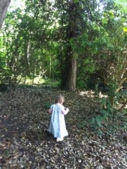Nature Trail - Copyright of author