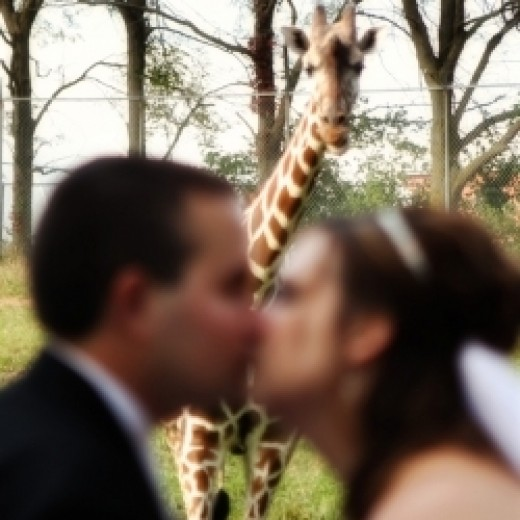 A Zoo Wedding
