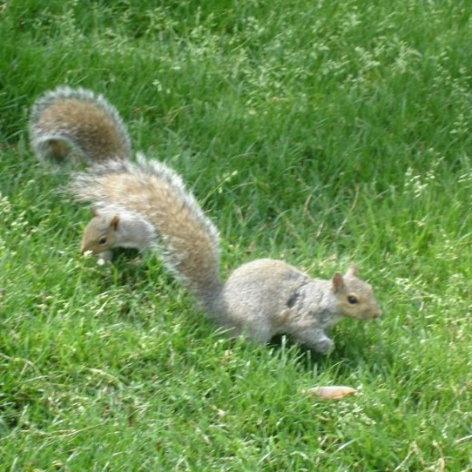 Squirrel Friends Come To Play