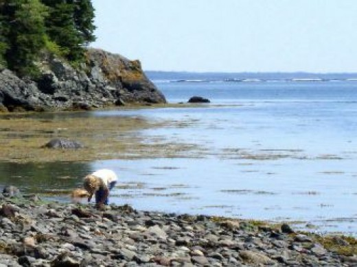 Beachcombing as a child, on a rocky beach of an unihabited island in the Bay of Fundy.
