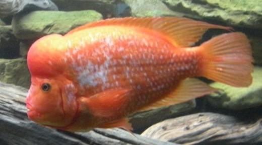 Shedd Aquarium Fish