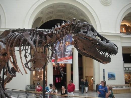 Sue Dinosaur Fossil Field Museum