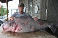 missouri state record - IGFA world record blue catfish