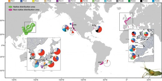 Shrimp Native vs Non-Native Haplotype Distribution around the world