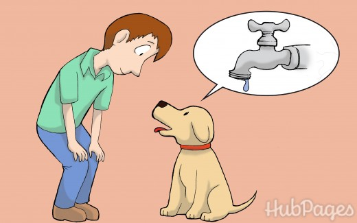Listening to your dog.