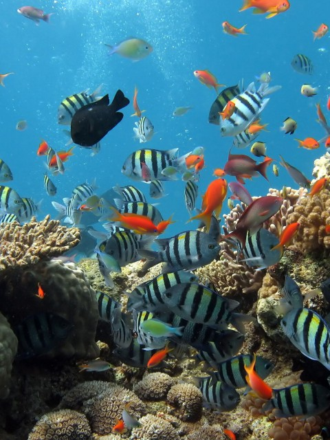 The Florida Reef is the third largest coral barrier reef in the world at 160 miles long.