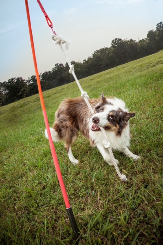 The Best Dog Toys of 2015 11S6OMsx