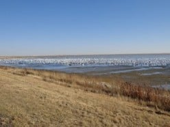 Chaplin Lake, Saskatchewan -- A Safe Haven For Migratory Birds