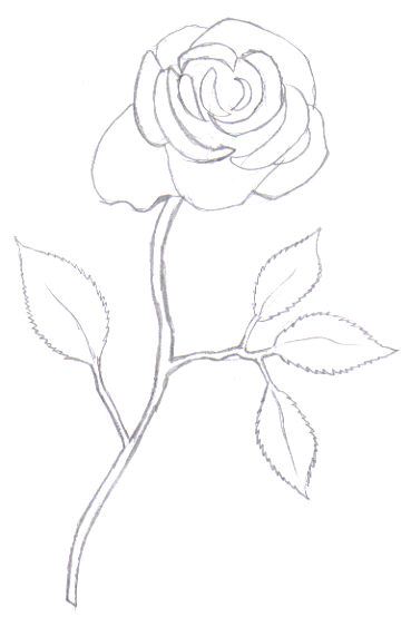 Looking more like a rose with darkened lines.