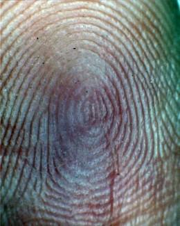 Fingerprint - Plain Whorl with spiral center