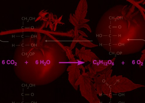 Photo derived by Robert Kernodle, showing main chemical reaction for photosynthesis.