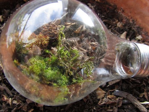 Absolutely love this handcrafted terrarium using a lightbulb. What an ingenious idea!