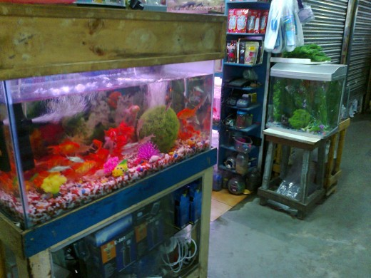 Fresh water from fish tanks are plentiful in nitrogen.
