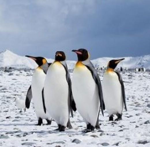 Photo by Antarctica Bound used under CC 2.0