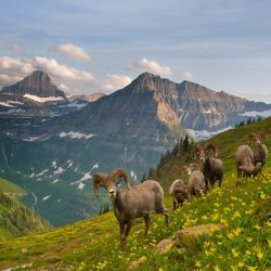 Image credit: http://www.mymodernmet.com/profiles/blogs/100-days-in-montanas-glacier
