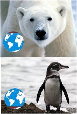 Photo credit: http://hadnoclue.com/2012/10/09/no-penguins-in-the-north-pole-no-polar-bears-in-the-south-pole/