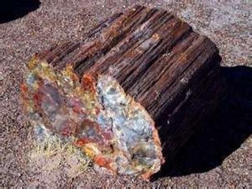 Image credit of petrified wood: http://www.statesymbolsusa.org/Arizona/fossil_petrifiedwood.html