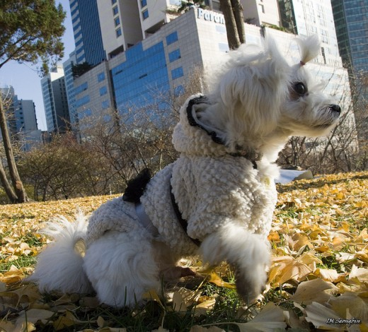 Photo taken by: Seongbin Im