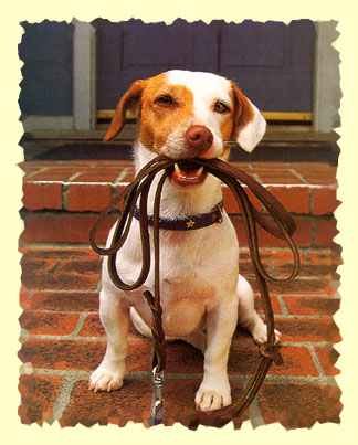 A happy dog holding his leash.