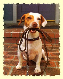Types of Dog Leashes