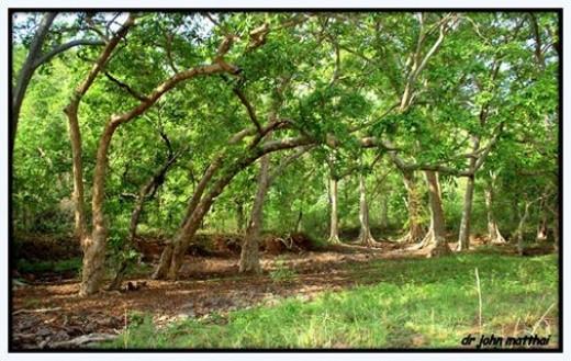 MP Forests - Jabalpur Range