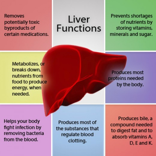 a healthy liver - a healthy life | hubpages, Human Body