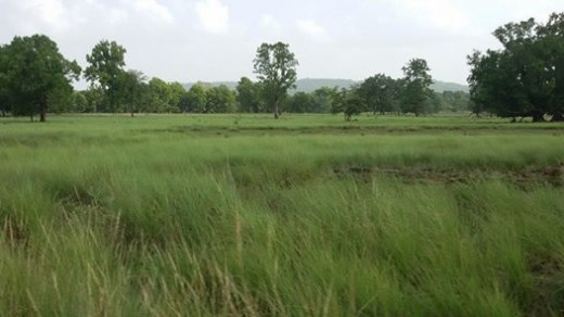 Kanha Grasslands & Forests