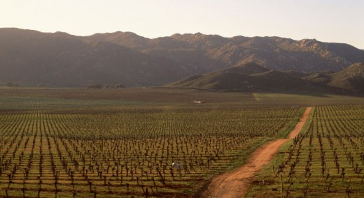 Guadalupe Valley Wine Country