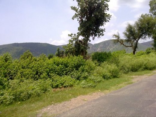 Road to Bhangarh