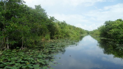 Everglades: Miami, FL