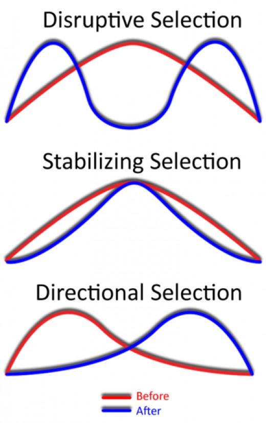 Distribution of Traits