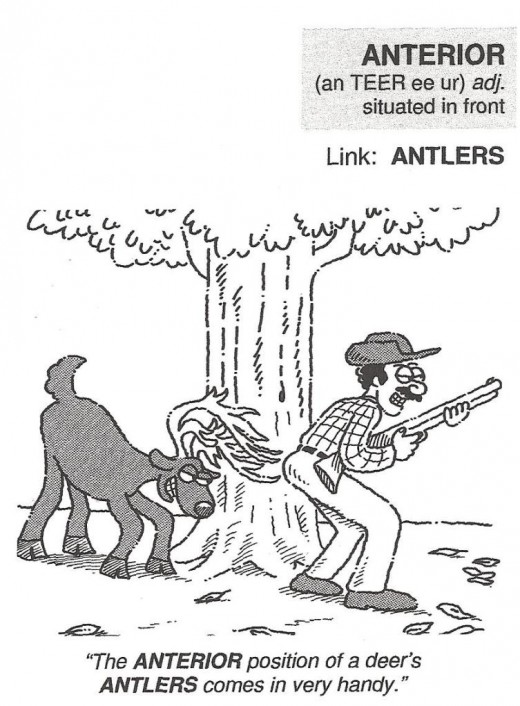 Example of  a Vocabulary Cartoon in the book